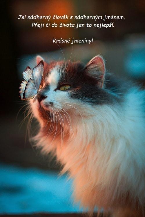 Kočka s motýlem na čumáčku.