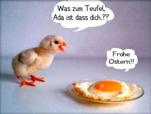 Kuře, dívající se na volské oko na talíři s německými nápisy s tématikou Velikonoc.