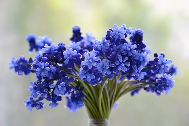 Kytice modrých květin k svátku pro Agnes.