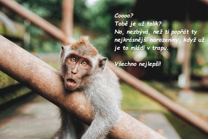 Malá opička ležící na zábradlí u schodů a s nápisem Všechno nejlepší!