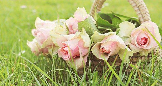 Přání k svátku s košíkem plných růží růží.