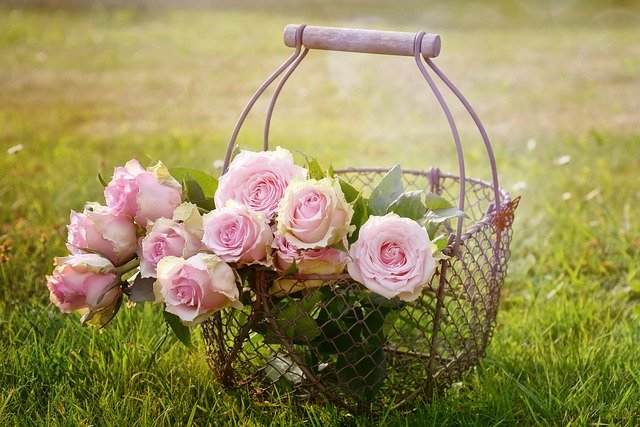 Přáníčko k svátku pro Ester s košem růží.