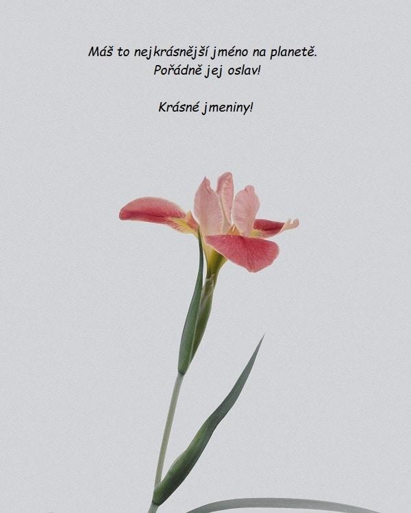 Foto růžové květiny s bílým pozadím.