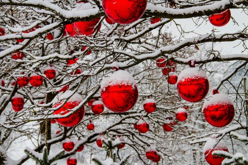 Zasněžené větve s červenými ozdobami na Vánoce.